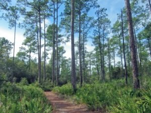 Top 5 Hiking Spots in Gainesville