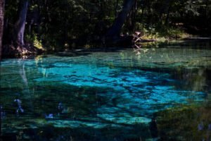 Top 5 Springs Near Gainesville