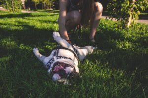 Best Dog Parks in Gainesville